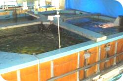 陸上養殖水槽・設備